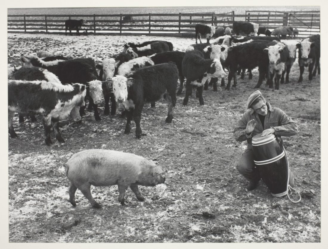 Dennis Stock, Jimmy Beating Bongo Drums for Farm Animals, 1955